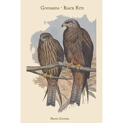 'Milvus Govinda Govianda Black Kite' by John Gould Graphic Art 0-587-31365-x