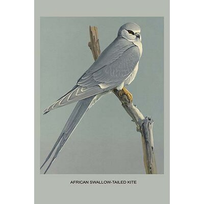 "'African Swallow Tailed Kite' by Louis Agassiz Fuertes Graphic Art Size: 30"" H x 20"" W x 1.5"" D"