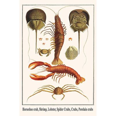 "'Horseshoe Crab Shrimp Lobster Spider Crabs Crabs Porelain Crabs' by Albertus Seba Graphic Art Size: 36"" H x 24"" W x 1.5"" D 0-587-29792-1"