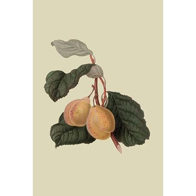 'Coes Golden Drop Plum' by William Hooker Graphic Art Size: 42