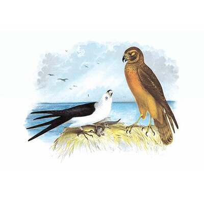 "Swallow-Tailed Kite and Marsh Hawk by Theodore Jasper Painting Print Size: 66"" H x 44"" W x 1.5"" D"