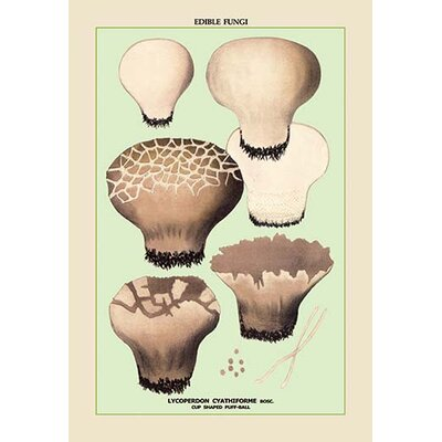 "Edible Fungi: Cup Shaped Puff-Ball Graphic Art Size: 42"" H x 28"" W x 1.5"" D 0-587-04911-1"