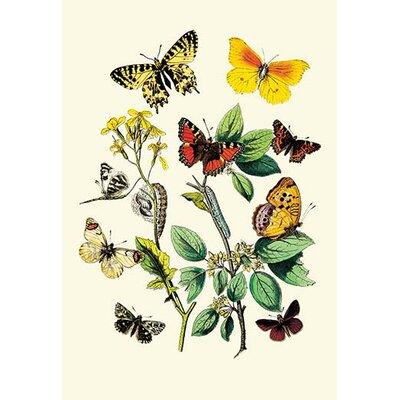 'Butterflies: E. Belemia, E. Tagis, et al.' by W. F. Kirby Painting Print