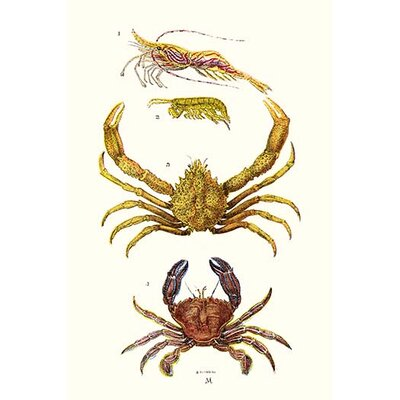'Spider Crab, Sand Skipper, Prawn, Velvet Swimming Crab' by James Sowerby Graphic Art 0-587-18724-L