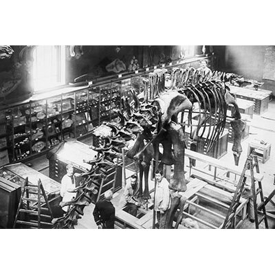 "'Diplodocus Dinosaur Being Assembled in Paris Museum' Photographic Print Size: 28"" H x 42"" W x 1.5"" D 0-587-45788-LC2842"