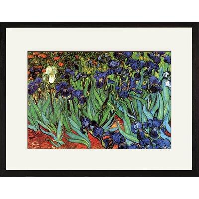 Irises by Vincent Van Gogh Framed Painting Print 25635-41218BF