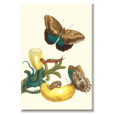 Banana Plant with Teucer Giant Owl Butterfly and a Rainbow Whiptail Lizard by Maria Sibylla Merian Graphic Art on Wrapped Canvas Size: 30