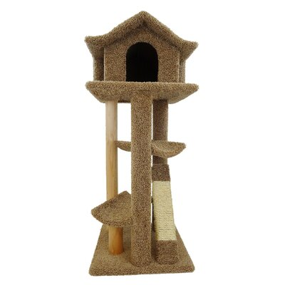 46 Premier Cat Pagoda Tree Color: Brown