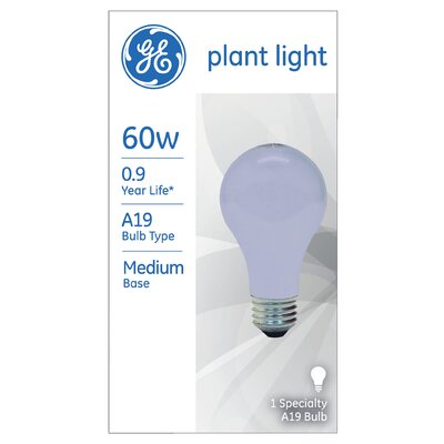 60W Blue 120-Volt Light Bulb