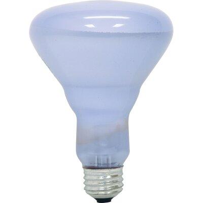 45W Light Bulb