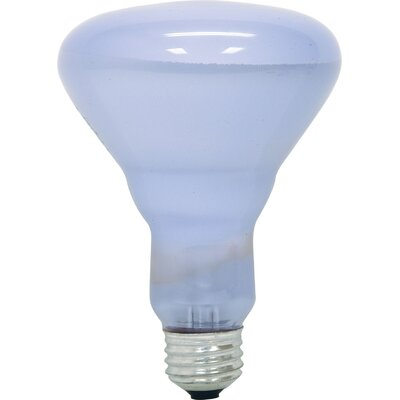 120-Volt 65W Light Bulb