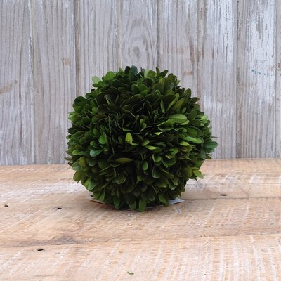 "Boxwood Ball Desk Top Plant Size: 12"" H x 12"" W x 12"" D"