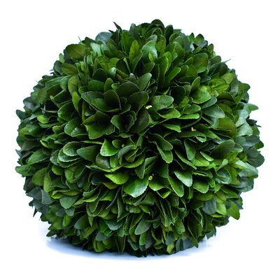 "Preserved Laurel Ball Desktop Topiary Size: 12"" H x 12"" W x 12"" D GRKS6675 41402322"