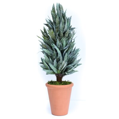 Preserved Mahonia Frosted Cone Floor Topiary in Pot Size: 20