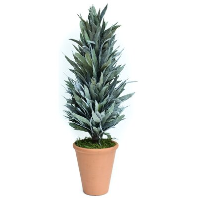 Preserved Mahonia Frosted Cone Floor Topiary in Pot