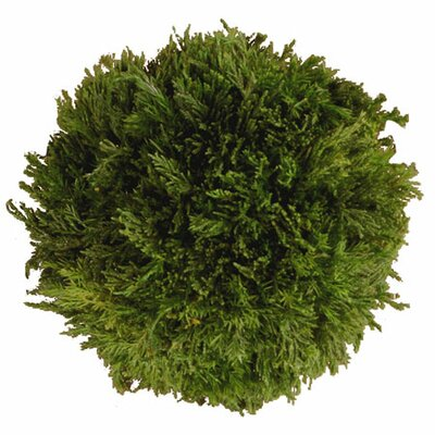 Cypress Ball (Set of 2)