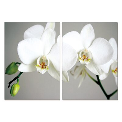 Pure Love Orchids Modern 2 Piece Photographic Print Set