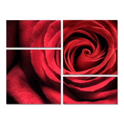 Romantic Rose Modern 4 Piece Photographic Print Set