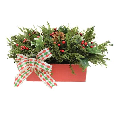 Happy Holly Desk Top Plant in Planter Set