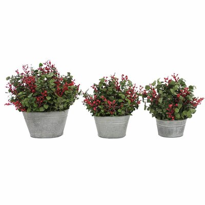 Berry Time 3-Piece Desk Top Plant in Planter Set