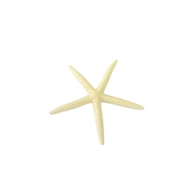 5-Finger Starfish Figurine Color: White