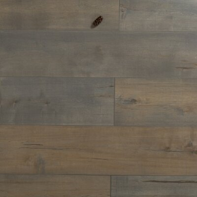 Cumulus 12 x 48 x 3mm Pine Laminate Flooring in Embossed