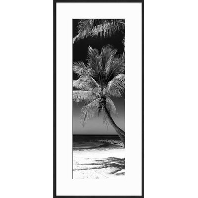 'Palms on a White Sand Beach in Key West - Florida' Framed Graphic Art Print 15221773
