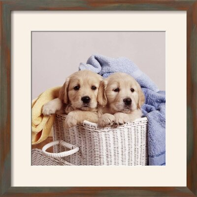 """'Golden Retriever Dog Two Puppies in Laundry Basket' Framed Photographic Print Frame: Grayson Mahogany/Brown Framed, Size: 23"""" H x 23"""" W 15204308"""