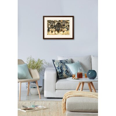 "'German Shepherd Three Puppies' Framed Photographic Print Frame: Soho Espresso/Brown Framed, Size: 19"" H x 25"" W 15204052"
