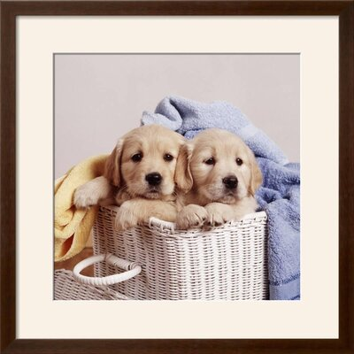 "'Golden Retriever Dog Two Puppies in Laundry Basket' Framed Photographic Print Frame: Soho Espresso/Brown Framed, Size: 23"" H x 23"" W 15204306"