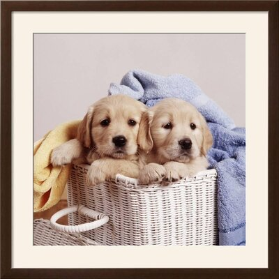 "'Golden Retriever Dog Two Puppies in Laundry Basket' Framed Photographic Print Frame: Soho Espresso/Brown Framed, Size: 31"" H x 31"" W 15204305"