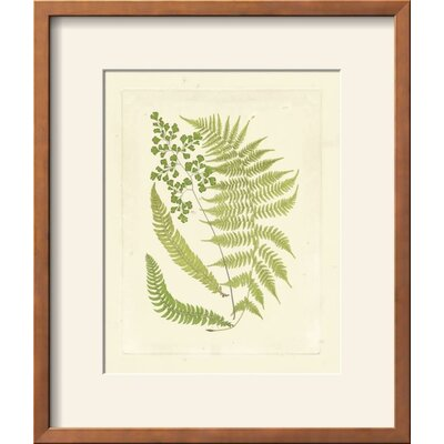 'Ferns with Platemark III' Framed Graphic Art Print