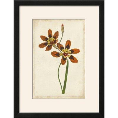 'Vibrant Botanicals IV' Framed Print 0988C0D2AF774815B2DD8157D9543730