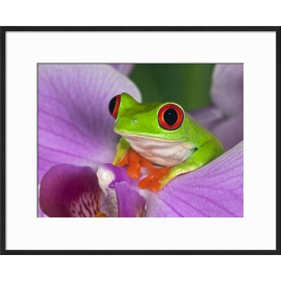 'Red-Eyed Tree Frog' Framed Photographic Print EC9EF0F798614C98AC5A8836BF4F233C