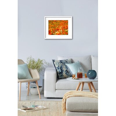 "'Poppies and Cream Cups, Antelope Valley, California, USA' Framed Photographic Print Frame: Chelsea Gray/White Framed, Size: 18"" H x 22"" W 15153100"