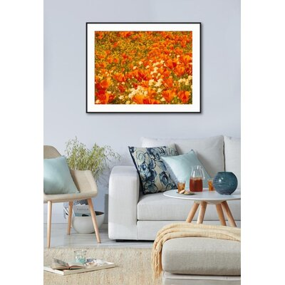 "'Poppies and Cream Cups, Antelope Valley, California, USA' Framed Photographic Print Frame: Ronda Ii Black Framed, Size: 29"" H x 37"" W 15153099"
