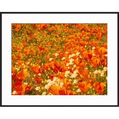 "'Poppies and Cream Cups, Antelope Valley, California, USA' Framed Photographic Print Frame: Ronda Ii Black Framed, Size: 23"" H x 29"" W 15153098"