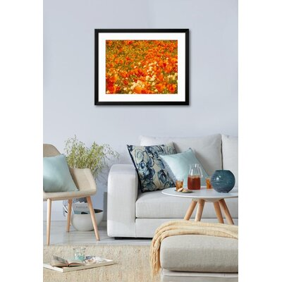 """'Poppies and Cream Cups, Antelope Valley, California, USA' Framed Photographic Print Frame: Soho Black Framed, Size: 25"""" H x 31"""" W 39FE189A14BC430881AF7B19F38042C4"""