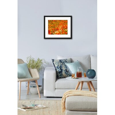 "'Poppies and Cream Cups, Antelope Valley, California, USA' Framed Photographic Print Frame: Soho Black Framed, Size: 19"" H x 23"" W 15153094"