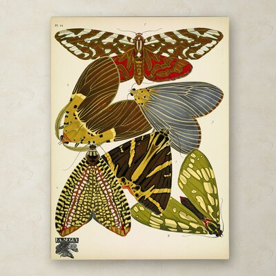 'Papillons 14' Graphic Art Print on Wrapped Canvas Size: 19