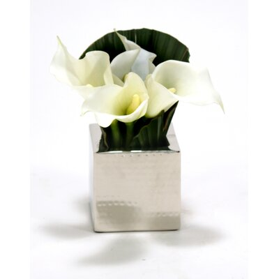 White Calla Lilies, Fan Palm in Square Nickel Planter