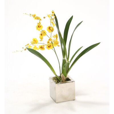 Oncidium Orchid in Square Nickle Planter (Set of 2) Flower Color: Gold