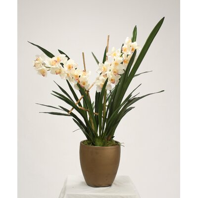 Cymbidium Orchids Blades in Bronze Stone Pot 9124