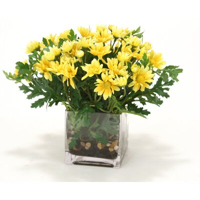 Waterlook Yellow Daisies in Square Glass Vase