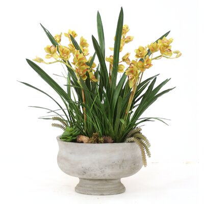 Cymbidium Orchids with Blades and Succulents in Oval Torino Planter 9171A