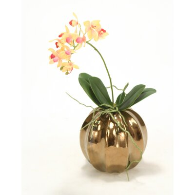 Rose Pink Cream Mini Orchid in Ball Vase (Set of 2)