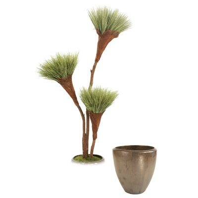 Basil Grass Pom Pom Tree in Pot T614-7-G19MBR