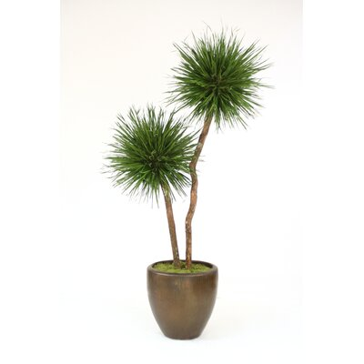 Pom Pom Grass Blade Tree in Planter T612-8-G19LBR