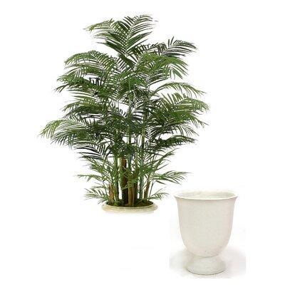 Deluxe Areca Palm Tree in Planter T505-8-C16L
