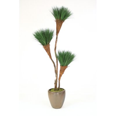 Grass Pom Pom Tree in Pot T611-7-G19MBR